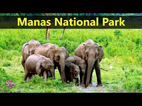 Best Tourist Attractions Places To Travel In India | Manas National Park Destination Spot