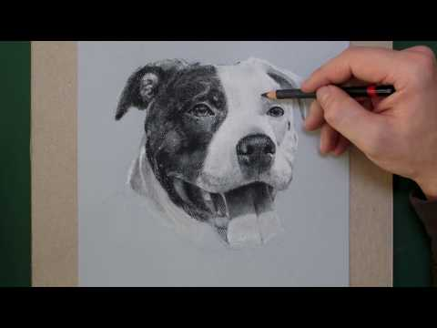 How To Draw a Dog - Charcoal Pit Bull Portrait Time Lapse