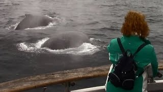 6.5.15 Humpback Whales & Risso