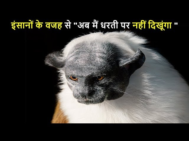 ??????? ?? ?? 10 ?????????? ??????? ???? ???? ?? | 10 ANIMALS THAT WILL BE EXTINCT SOON