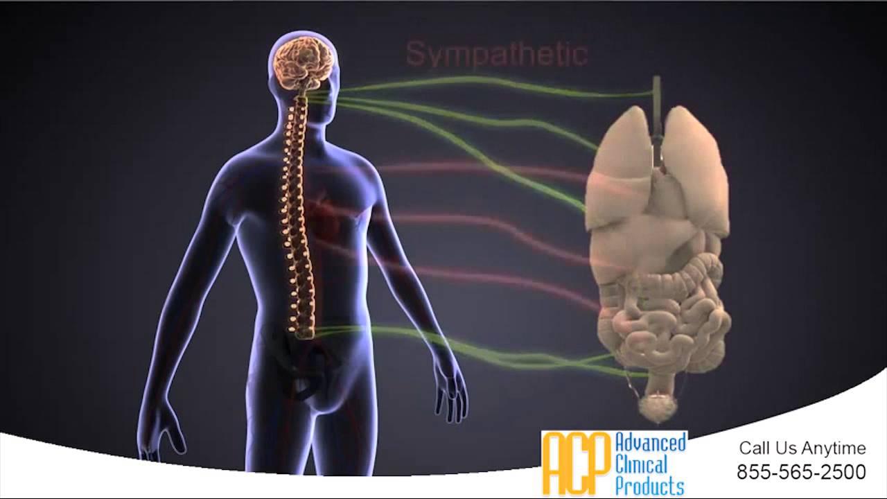 Autonomic Nervous System (ANS) Assessment - YouTube