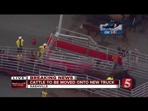 Farmers Begin To Move Cows Off Nashville Road