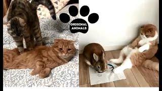 Original Animals #15. CUTE AND FUNNY ANIMALS VIDEO/ МИЛЫЕ И СМЕШНЫЕ ЖИВОТНЫЕ.