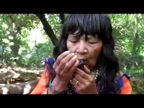 Charla sobre Ceremonias, Icaros y Ayahuasca