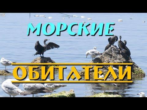 Крымские зарисовки|Морские обитатели|Katerina Volna