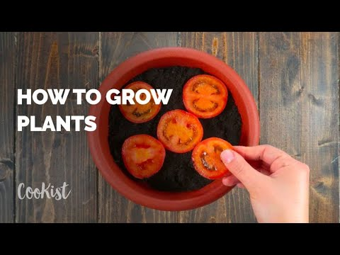 How to easily grow plants at home