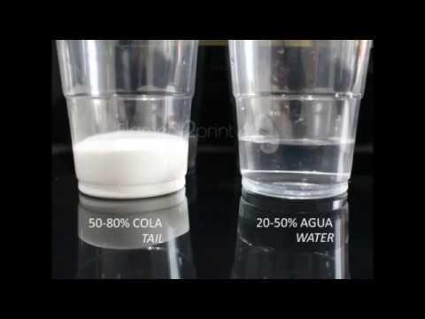 Resultado de imagen de cola PARA PEGAR y agua
