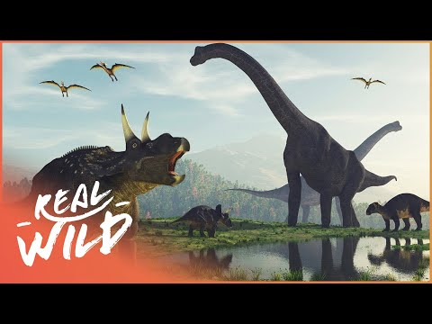 When Dinosaurs Ruled The Earth   Amazing Animals   Real Wild Documentary