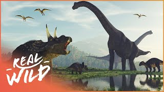 When Dinosaurs Ruled The Earth, And What Happened Next? | Amazing Animals | Wild Things