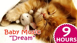 ❤ 9 Hours Lullaby music for kittens ❤ : Dream  Cats songs to sleep