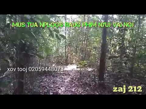 Mus tua nploos raug phim nyuj vai noj 2/12/2019 thumbnail
