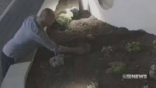 Succulent Thief   9 News Perth