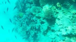 Шарм эль Шейх подводный мир 2020 июль Очищение моря во время карантина