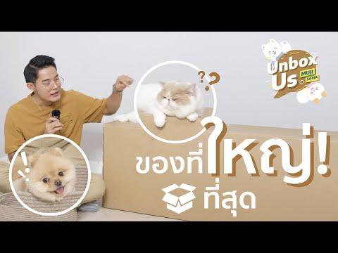Unbox Us ของใช้หมาแมวที่ใหญ่ที่สุด!!! 🐶🐱 : Airbuggy Dome3