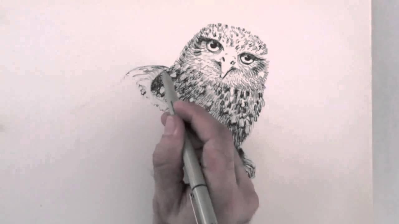 Karakalem Baykuş Çizim Tekniği [Karakalem Çizim Sanatı