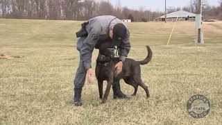 Ksptv Presents: The Canine Section (ep. 12)