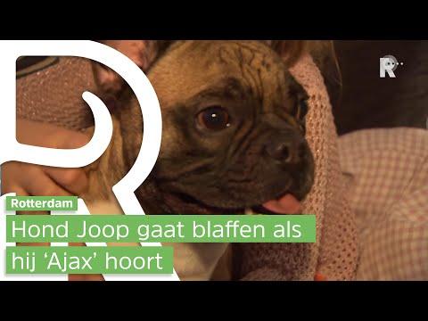 Rotterdamse hond Joop heeft hekel aan Ajax