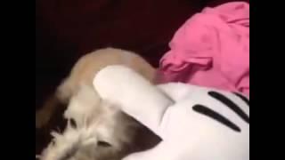 Микки Маус VS собака