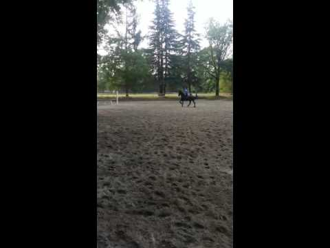 Missy saltatrice di ostacoli