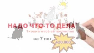 Стерилизация бездомных животных, фонд РЭЙ
