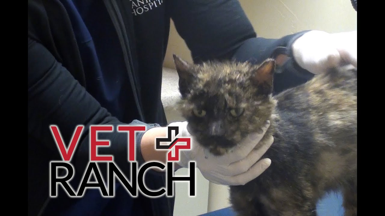 lovable-cat-saved-from-euthanasia
