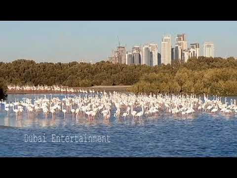 Dubai Wildlife Sanctuary Ras Al Khor Dubai
