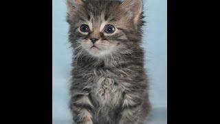 Коты знают свои имена. Смешные коты.
