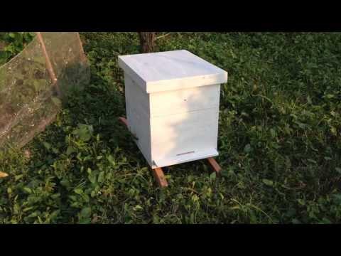 Thùng nuôi ong mật ngoại - Dụng cụ nuôi ong; Cheap Beehive