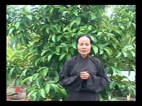 PGHH - Quyen 4 GIAC ME TAM KE (1) - Van Ut, Van Thau, Kim Loi, Thi Khoi - HoaHaoMedia.Org