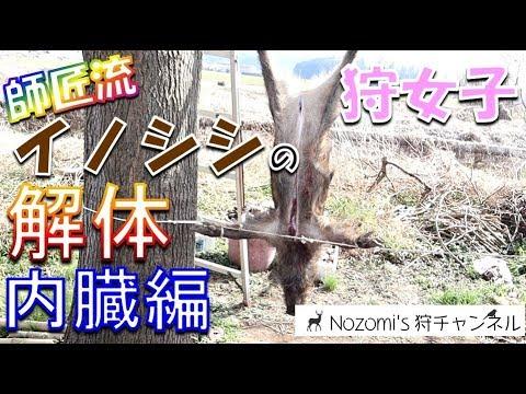 #1【狩猟】イノシシの捌き方を熟練ハンターお師匠様に教わってきた☆内臓編【狩女子】