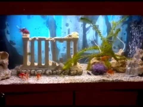 Greek Ruin Themed Fancy Goldfish Tank - YouTube
