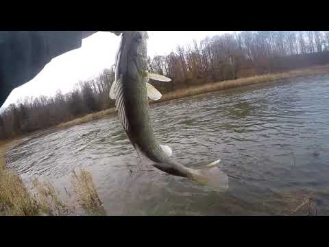 Thames River- Fall Fishing For Walleye