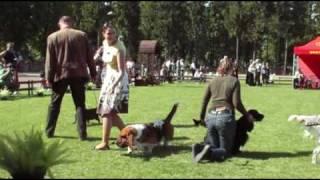 Jelenia Góra 2009-najpiękniejszy pies myśliwski