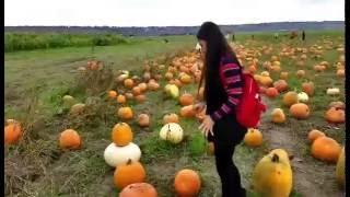 เดินเที่ยว ฟาร์ม ฟักทอง ก่อนวัน ฮาโลวีน  Stocker Farms- Pumpkin