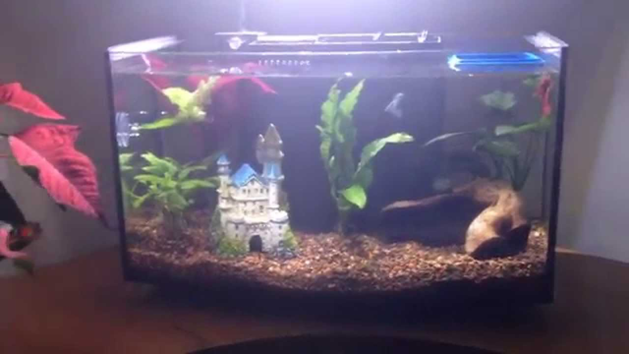 Petco arc tank design defect youtube for Petco fish tank filters