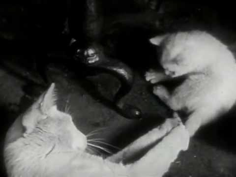 The Private Life of a Cat (Alexander Hammid & Maya Deren, 1945)
