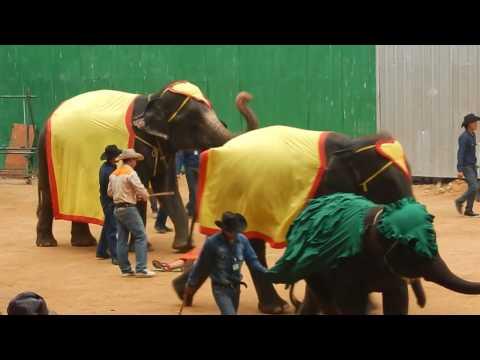 Озабоченные слоны
