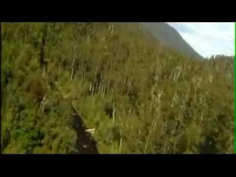 Threatened Tasmania Forest  - Lower Weld Valley