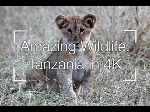Amazing Africa Wildlife, Serengeti in 4K - Tanzania Safari