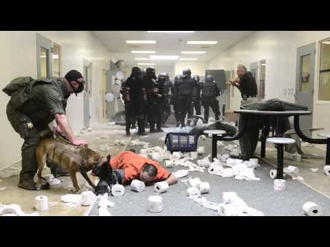 Weld County Sheriff's K9 Training