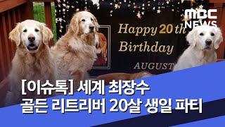[이슈톡] 세계 최장수 골든 리트리버 20살 생일 파티…