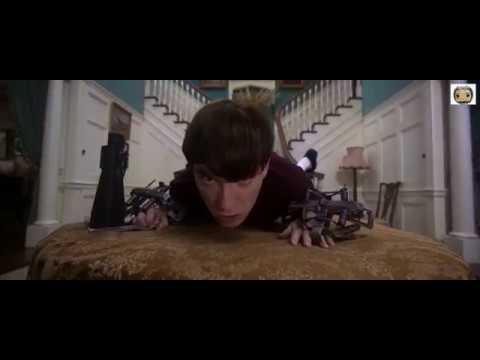 Peter Rabbit (2018) - Rabbit Attack One Scene