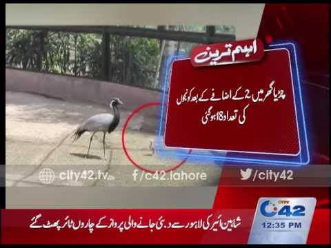 42 Breaking: Birth of 2 cranes  in Lahore Zoo