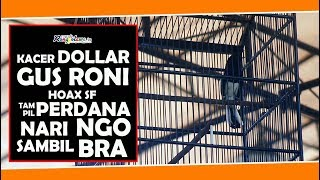 Gambar cover Main Perdana, Kacer Dollar Milik Gus Roni Tampil Duduk Nari Kobra