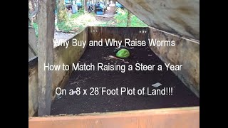 Why buy worms - raising worms for profit