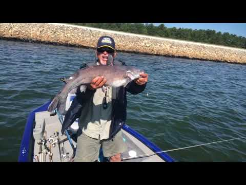 Catfishing With Worms And Shrimp