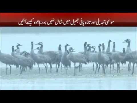 One million birds migrate Siberia to Pakistan in winters