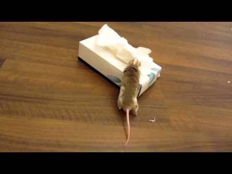 My Mouse Gets Me A Tissue When I Sneeze