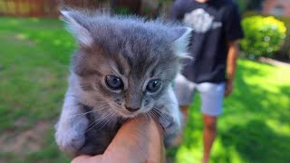 We Saved Baby Kittens... Adorable