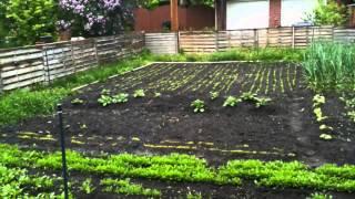 75 Day Garden Timelapse